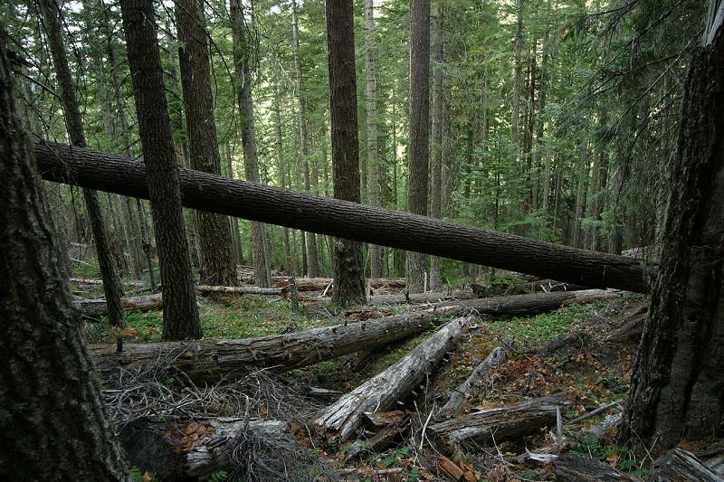 Albanci bespravno sekli šumu, pa pucali na srpske policajce