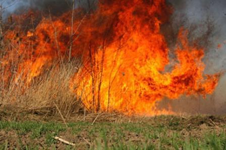 Nadomak Višegrada bukti požar, ugrozio najstarije drvo