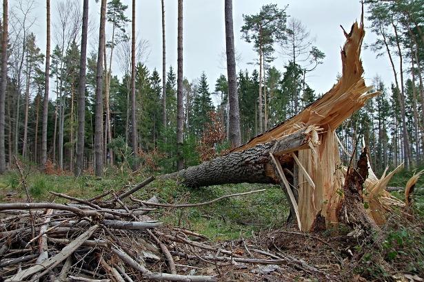 Podgorica: Jak severni vetar i danas oborio drveće i fasadu