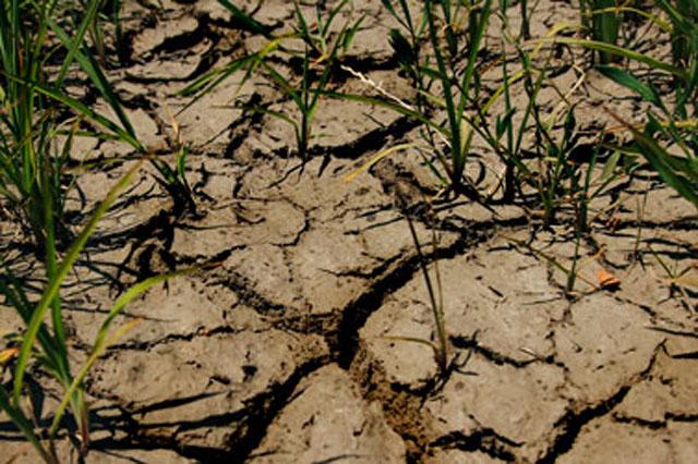 Srbija će uskoro usvojiti Zakon o klimatskim promenama