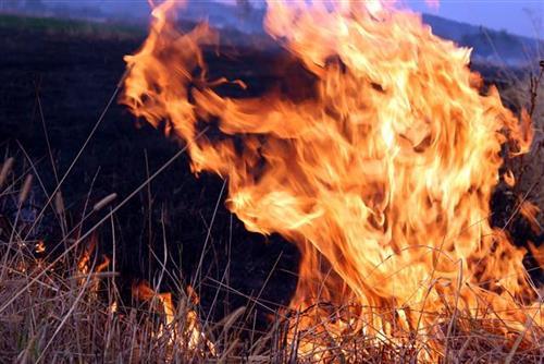 Požar na Eviji, evakuisano naselje