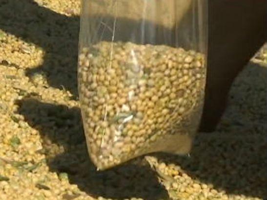Sojino brašno iz Obrenovca za 40 država