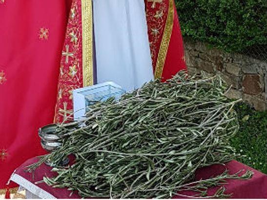 Katolički vernici obeležavaju Cveti