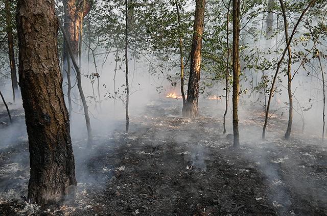 Grčke vlasti upozorile na rizik od šumskih požara zbog toplotnog talasa