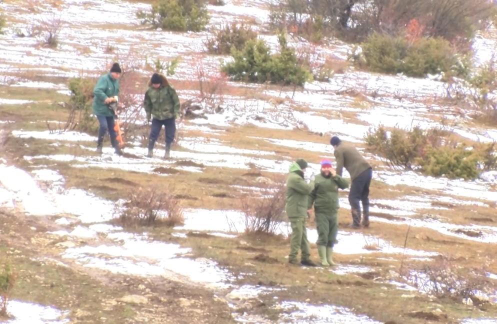 Pošumljavanje na teritoriji opštine Zubin Potok