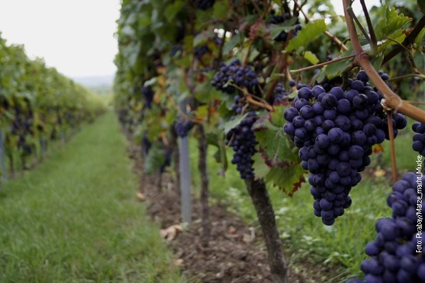 Strategija za razvoj vinarstva i vinogradarstva do kraja februara