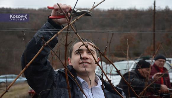 Sveti Trifun obeležen u vinogorju nadomak Leposavića