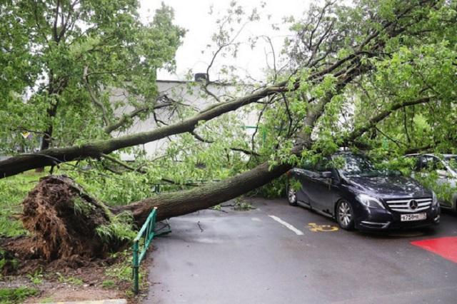 Moskvu zahvatilo jako nevreme, srušeno mnogo stabala