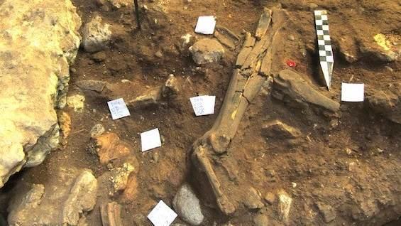 Prvi pouzdano identifikovani fosil neandertalca u Srbiji