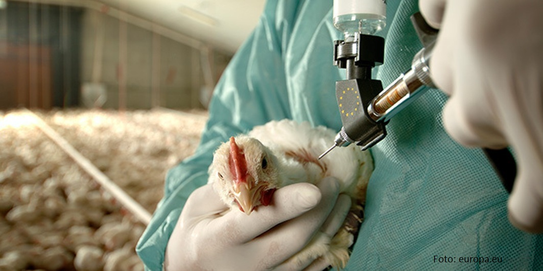 Kina: Muškarac zaražen novim sojem ptičjeg gripa
