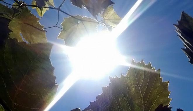 Danas pretežno sunčano i toplije