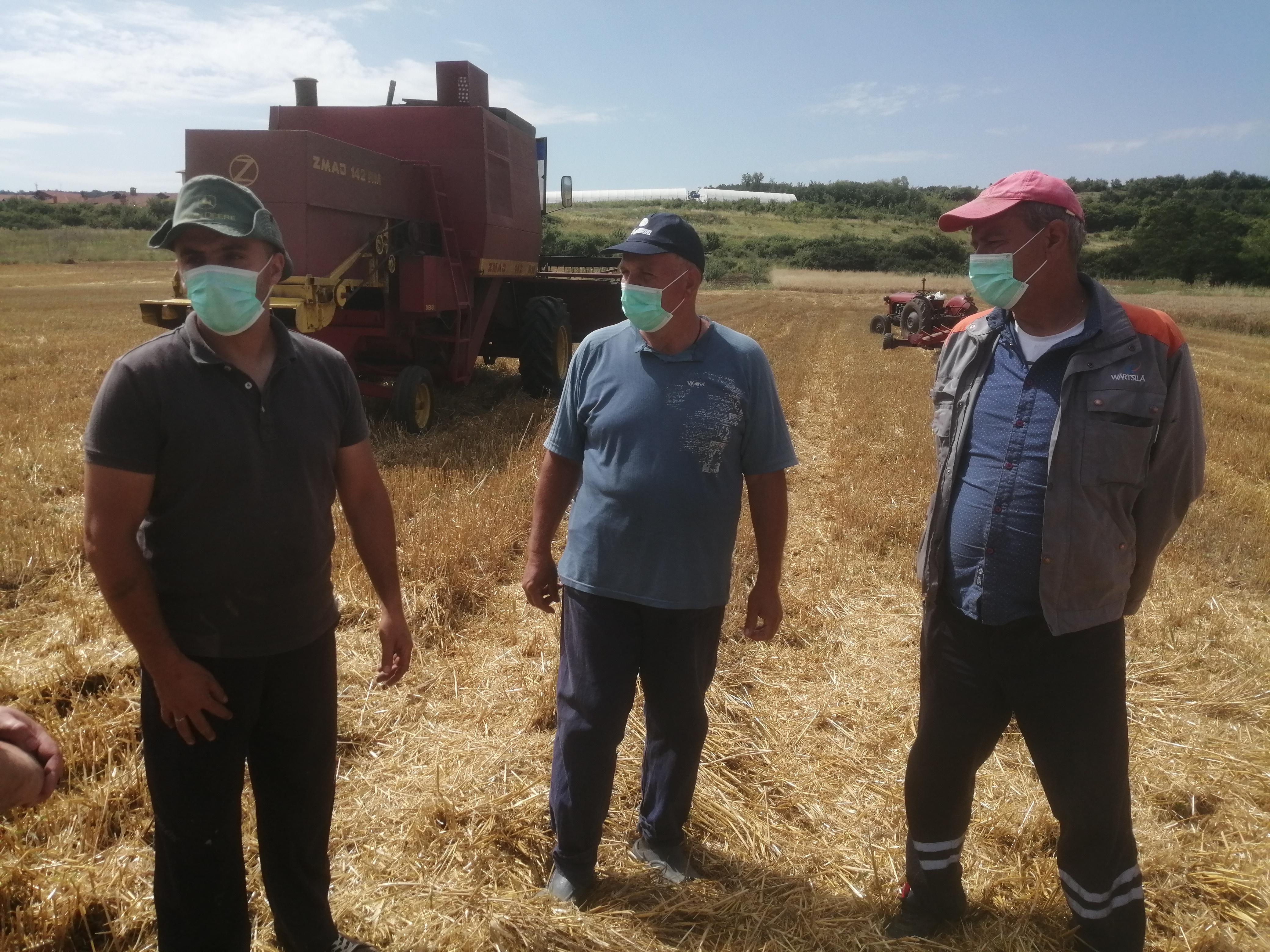 Gračanica: Počela žetva pšenice, ovogodišnji prinosi iznad očekivanja poljoprivrednika