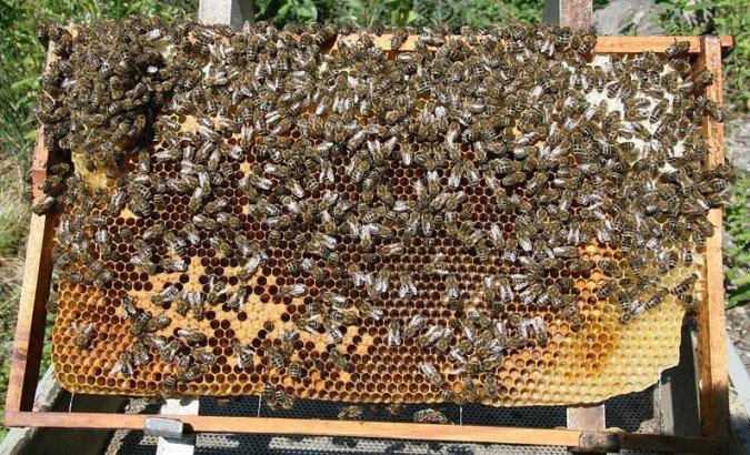 Iz Srbije za godinu dana prepolovljen izvoz meda